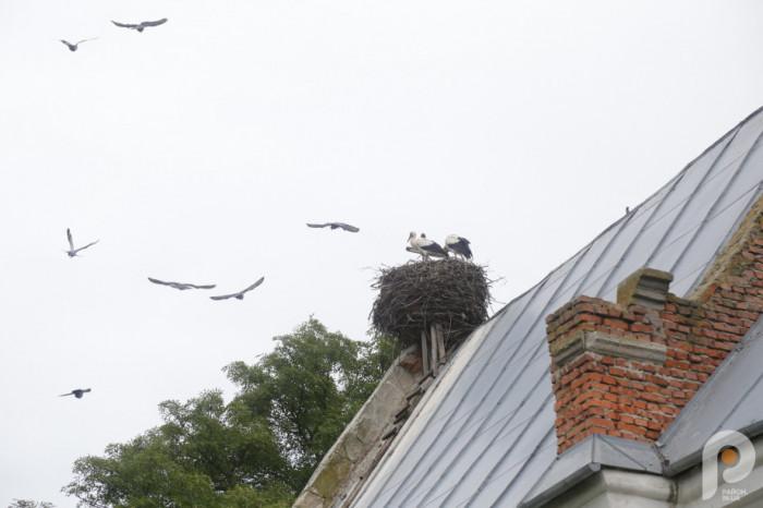 На даху Успенської церкви – птахи